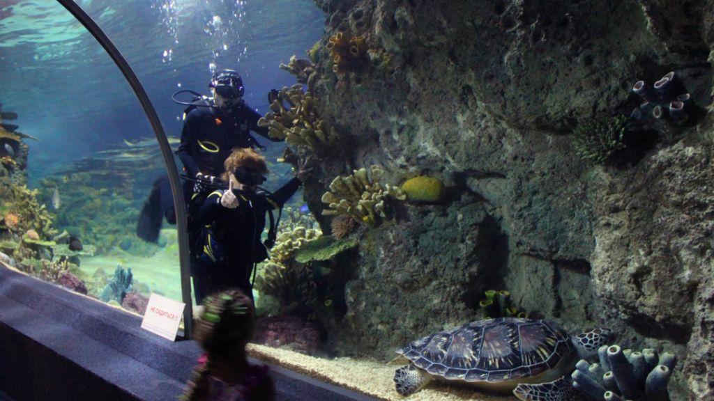Океанариум с акриловым тоннелем длиной 44 метра