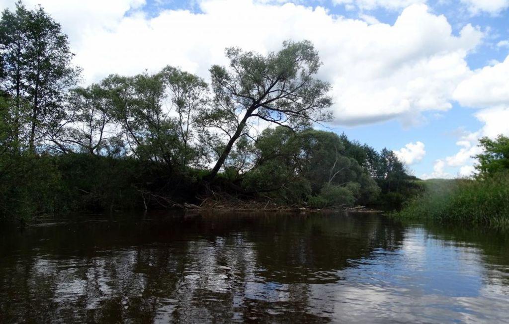 Леса, находившиеся вдоль реки, оказали огромную роль при сражениях с фашистами