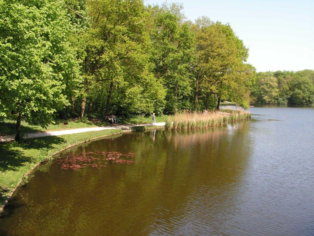 Гаагский лес