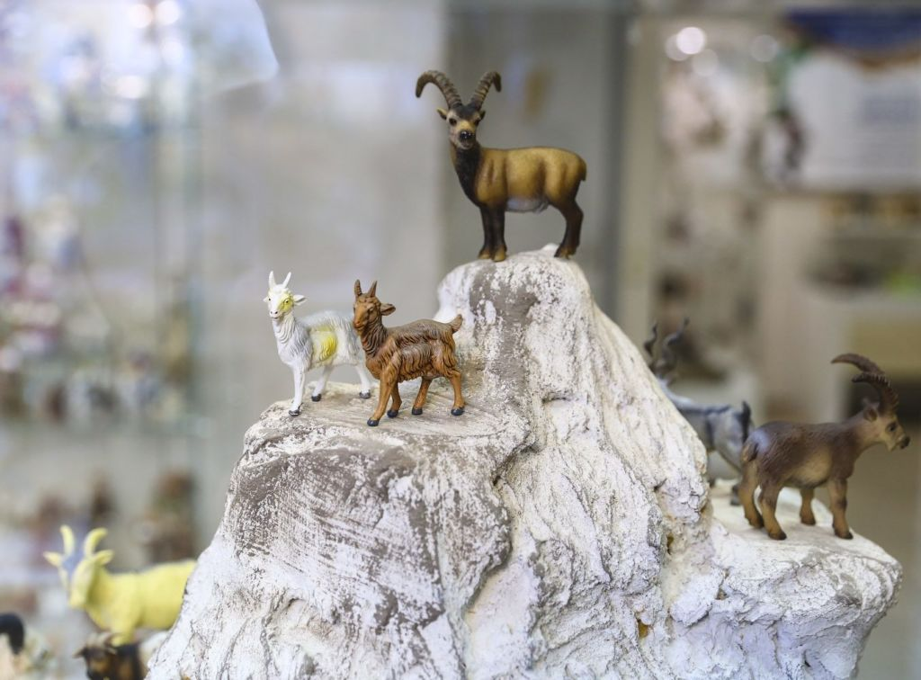 Экспонаты музея козла