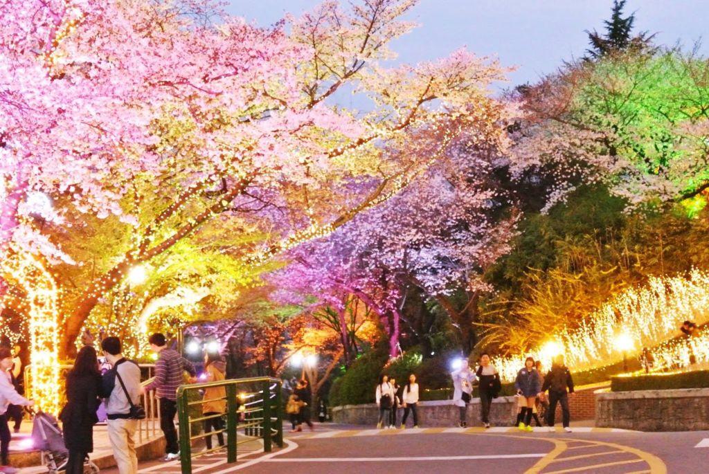 Вечером в парке включают подсветку и влюбленные могут наслаждаться совместными прогулками