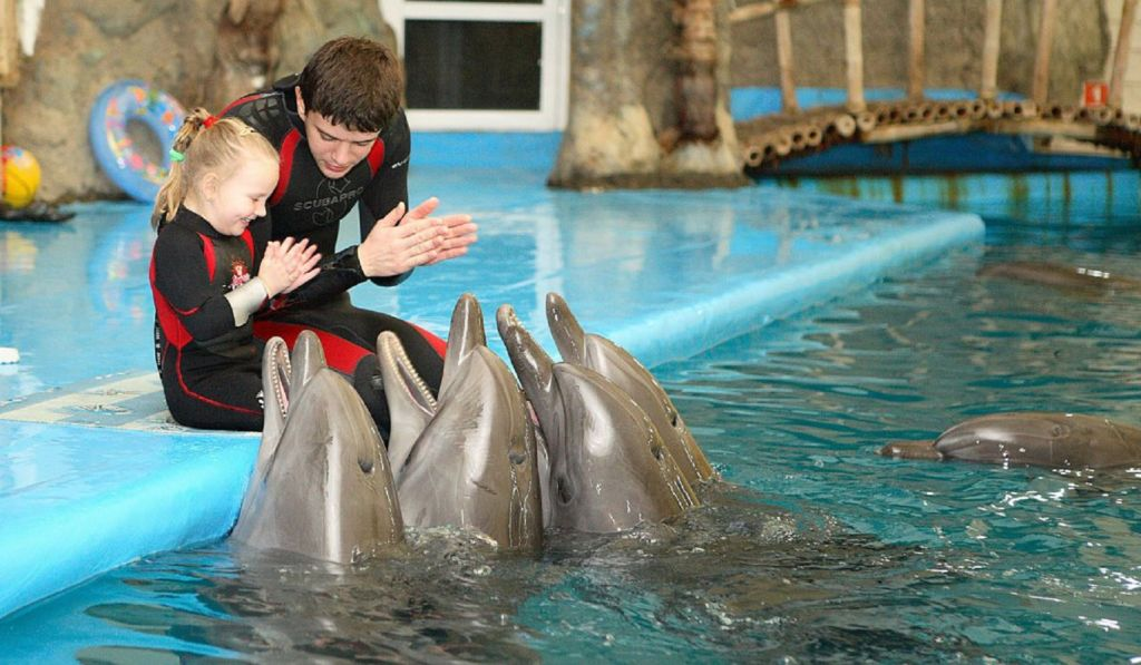 Общение с водными млекопитающими