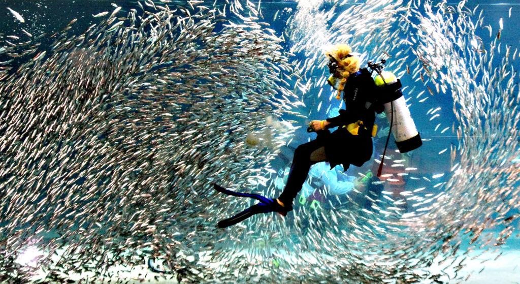В праздники в аквариуме можно увидеть интересные представления