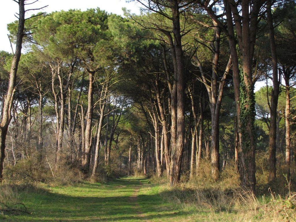 Сосновый лес Классе