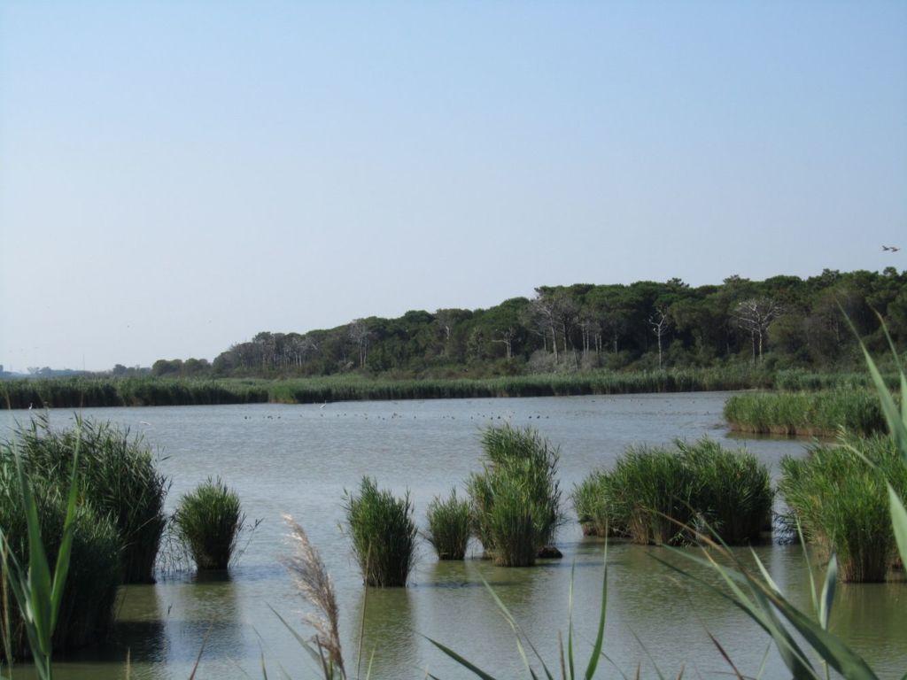 Здесь можно увидеть всё богатство Средиземноморской растительности