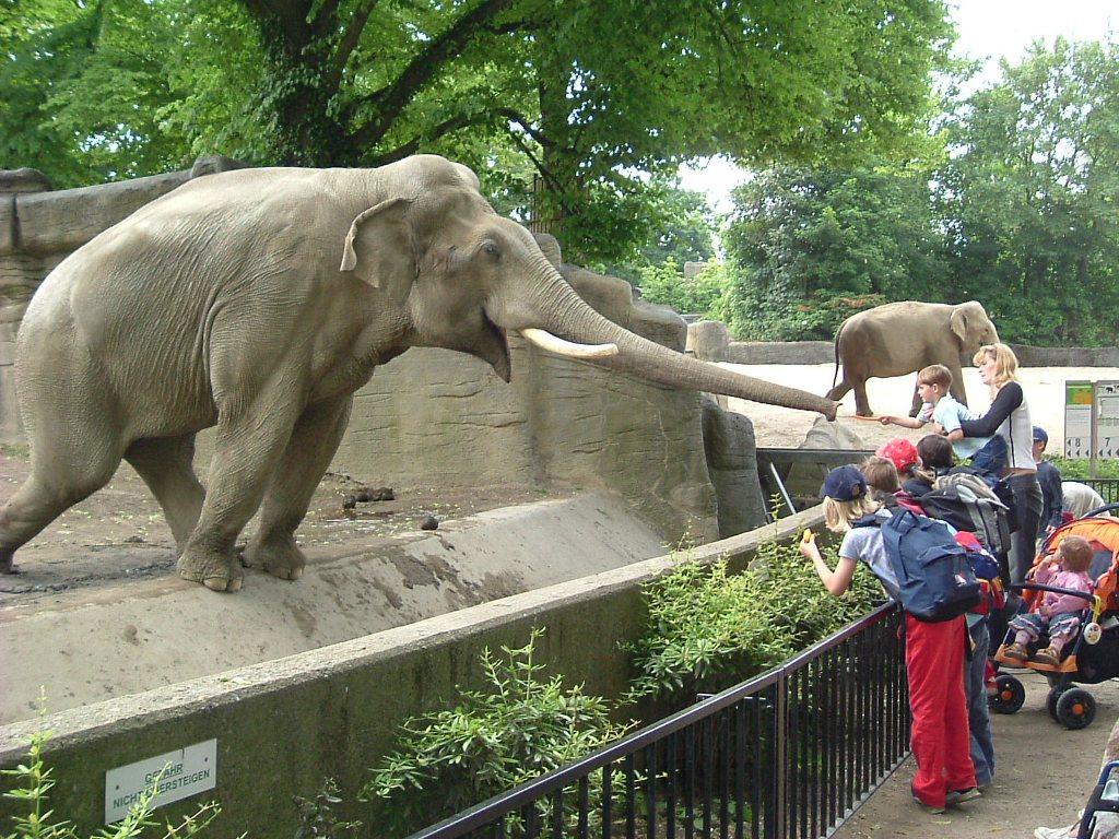 В зоопарке дети могут погладить и покормить многих животных